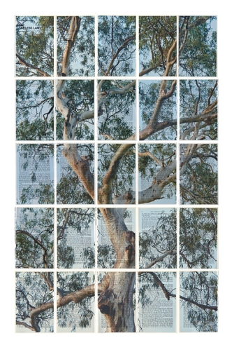 The Timeless Land - Wentworth redgum
